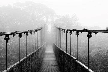 Hängebrücke im Nebelwald in Costa Rica von Bianca ter Riet