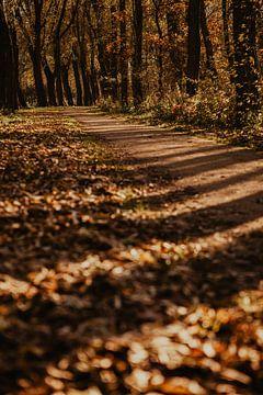 Herbstwald Niederlande von Amber den Oudsten