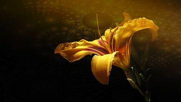 Taglilie durchdringt fraktalen Kern von Rudy & Gisela Schlechter