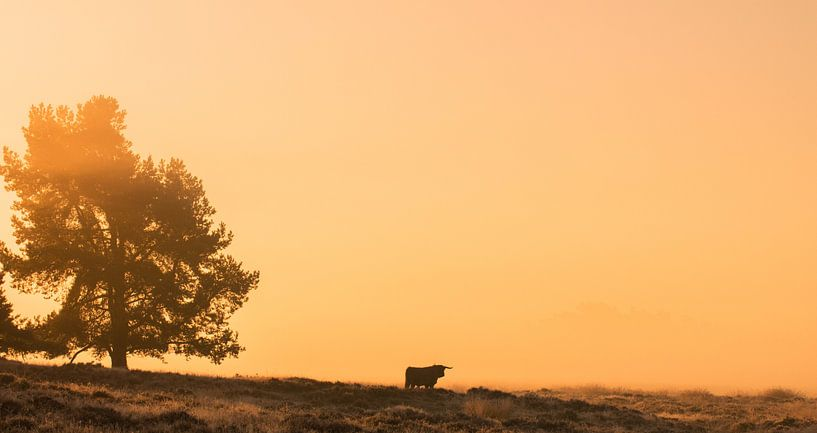 Zonsopkomst op de Veluwse Heide van Harm Roseboom