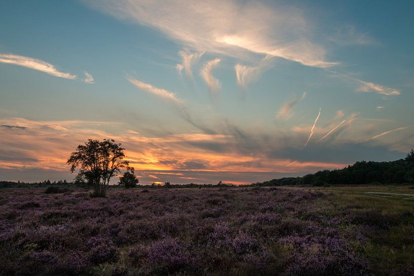 Hoorneboegse Heide - 1 van Nuance Beeld