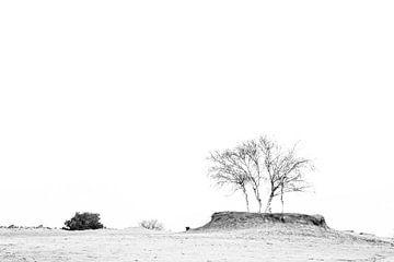 Baum im Sand