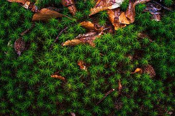 Natur im Wald im Detail von Jens Sessler