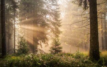 Sonnenstrahlen im Wald von Jeroen Luyckx