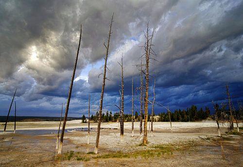 Yellowstone van