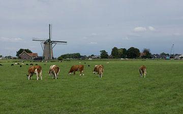 Nederlands kijkje van Jan van Voorst Vader