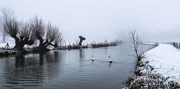Des cygnes nageant dans le froid sur le Kromme Rijn par un jour de neige et de brouillard.