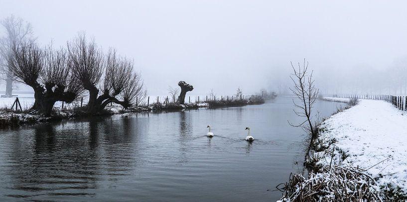 Des cygnes nageant dans le froid sur le Kromme Rijn par un jour de neige et de brouillard. sur Arthur Puls Photography
