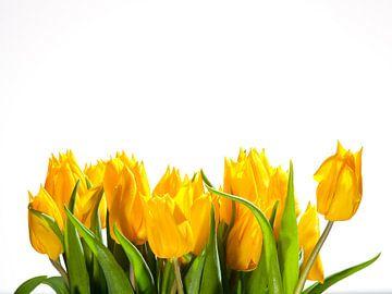 Gele tulpen tegen witte achtergrond van Victor van Dijk