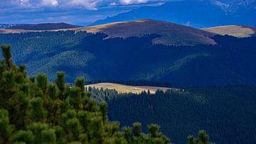 Freies Feld in den Bergen von Iezer Papusa, Rumänien von Jessica Lokker