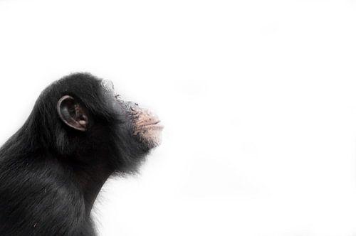 Monkey! von Babette van Gameren