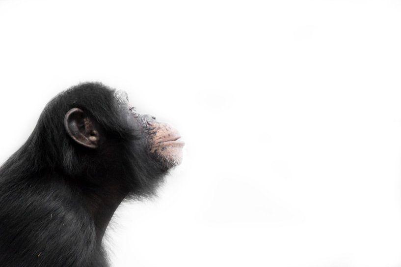Monkey! sur Babette van Gameren