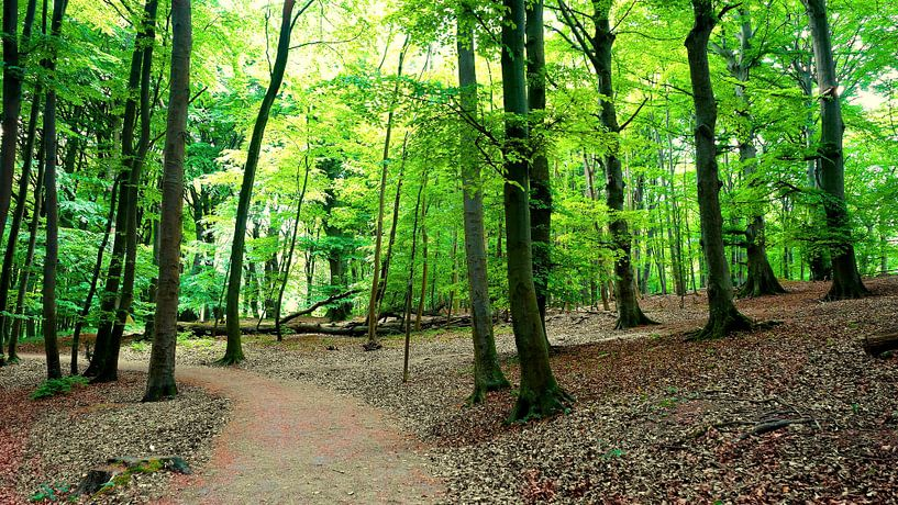 Maiwaldpanorama von Ostsee Bilder