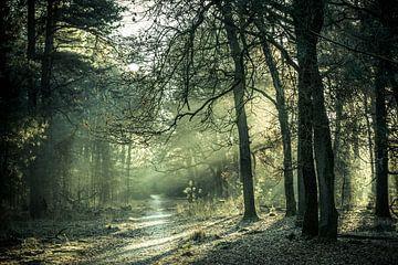 de ochtendzon schijnt door de bomen van Marc Goldman