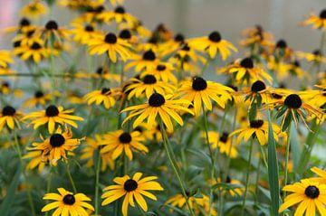 Gele bloemen von Anita van Hengel