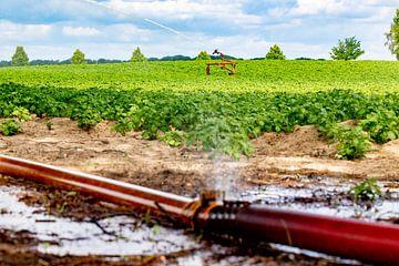 Am Stadtrand von Roermond besprüht ein Landwirt sein Land. Alle Wassermanager in den Niederlanden se von Niels Wenstedt