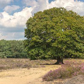 Beukenboom op de bloeiende hei in augustus van Eric Wander