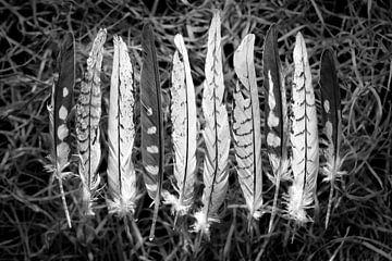 Macro van zachte veertjes in zwart wit van Lisette Rijkers