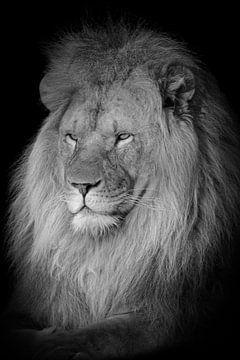 Löwe Porträt in schwarz und weiß von Marjolein van Middelkoop