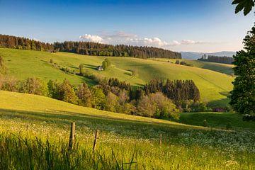 Landschap bij St.Märgen van Jürgen Wiesler