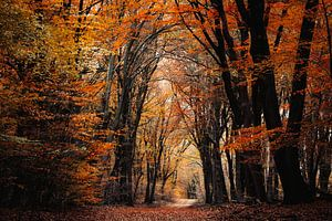 Bernsteinwald von Tvurk Photography