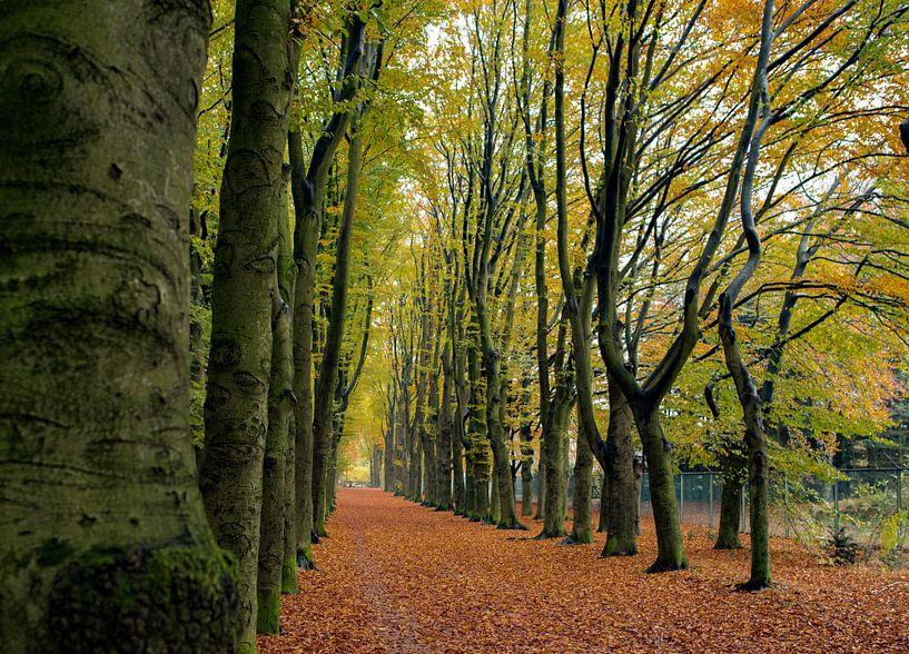 Een herfst laantje van Cilia Brandts