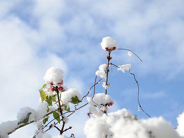 Sneeuwdans van Margo Biewinga