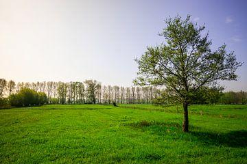 Einsamer Baum auf einem Feld am Abend von Mickéle Godderis