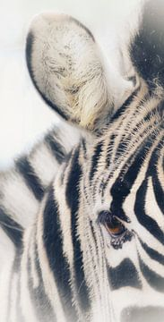 Zebra; Porträt in Schwarz und Weiß von Nienke Bot