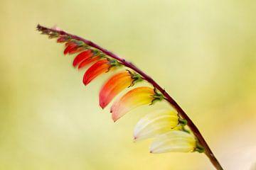 regenboog van Natascha Kok