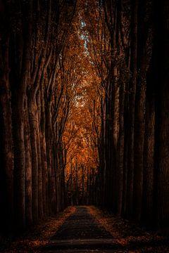 Oranje bospad van Urban Photo Lab