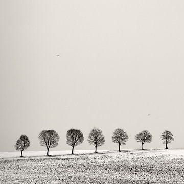 Baum Allee von Lena Weisbek