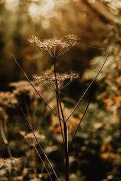 Launische Schwingungen der Natur von Amber den Oudsten