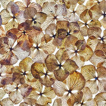 Hortensienblätter Collage von Klaartje Majoor