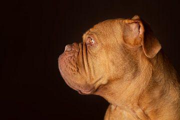 Hond van Patrick Reymer