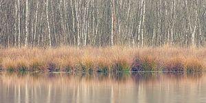 Winterliche Farben, Leersumse Veld, Utrechtse Heuvelrug, Niederlande