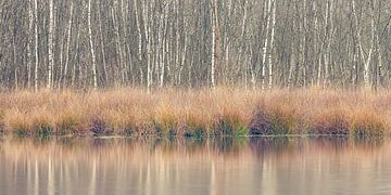 Winterkleuren, Leersumse Veld, Utrechtse Heuvelrug, Nederland van Sjaak den Breeje