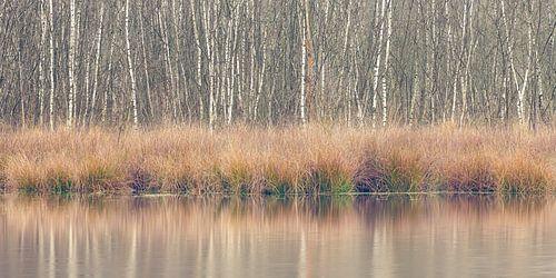 Winterkleuren, Leersumse Veld, Utrechtse Heuvelrug, Nederland