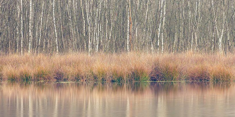 Winterliche Farben, Leersumse Veld, Utrechtse Heuvelrug, Niederlande von Sjaak den Breeje Landschapsfotografie