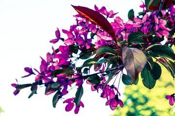 Paarse Bloemen van Jane Changart
