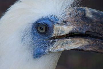 Blauw oog van Kiezel Fotografie