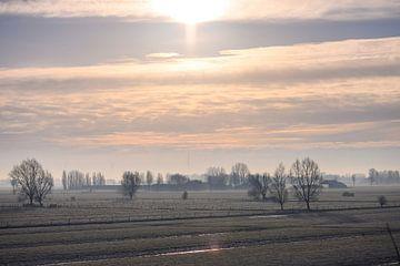 zonlicht over de akkers van Tania Perneel