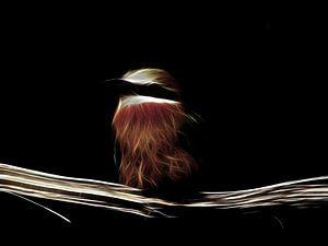bee-eater van Christophe Fruyt