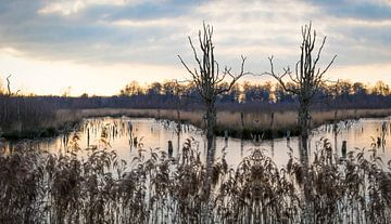 Magisch landschap wetland natuurgebied zonsondergang van Ger Beekes