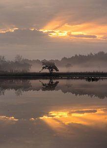 Reflexionen im Nebel