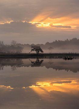 Reflexionen im Nebel von Paul Begijn