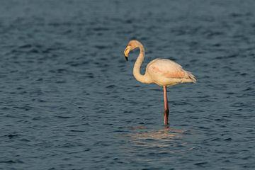 Flamingo van Karla Leeftink