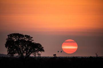 Lever de soleil atmosphérique sur Sharing Wildlife