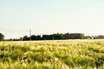 Landschap graanveld von Stef De Vos