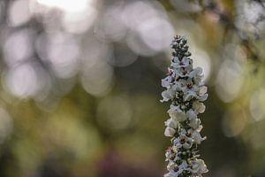 bloemen part 15 van Tania Perneel